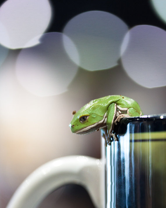 Little Dumpy tiny tree frog