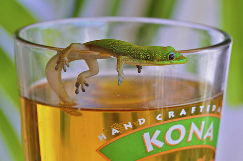 35 fantastic pictures of geckos