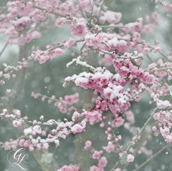 """Yuki Ga Furu"" (The Snow is Falling) flower"