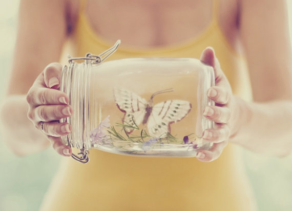 Preservation mason jar butterfly