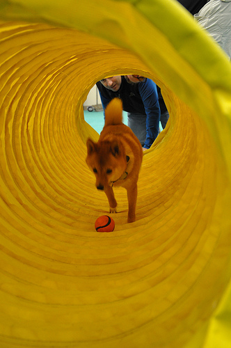 taro runs through a tunnel dog