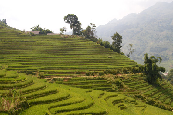 Rice Paddies in Sapa, Vietnam