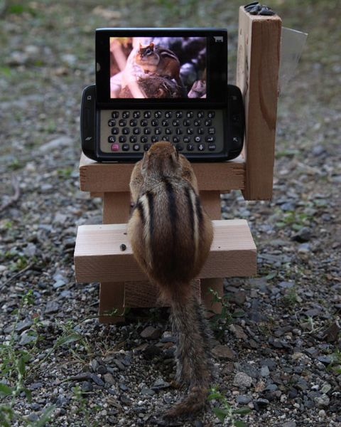 Computer Chip chipmunk