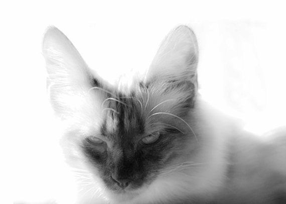 Cat Spirit black and white photography
