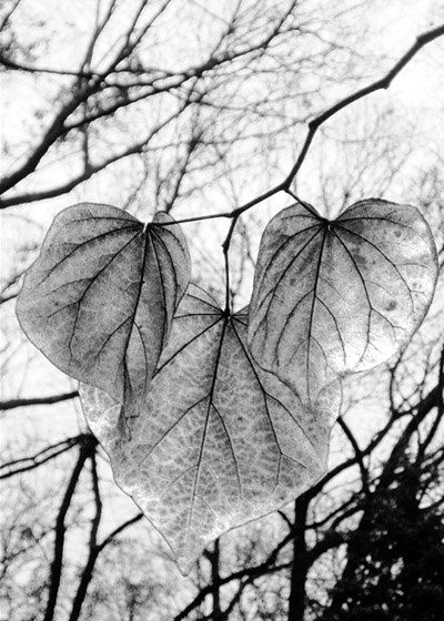 fall leaves black and white photography