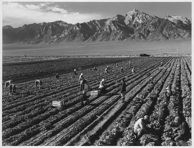 Farm, farm workers, Mt. Williamson in background ansel adams