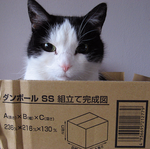 Hako no naka ni imasu cat in box