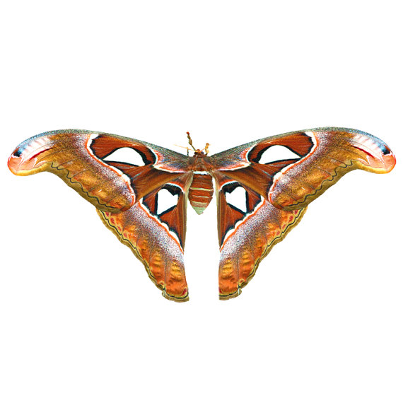 Atlas Moth Shrugged