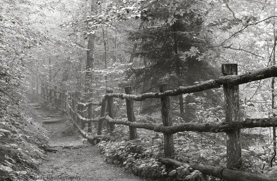 Appalachian Trail black and white