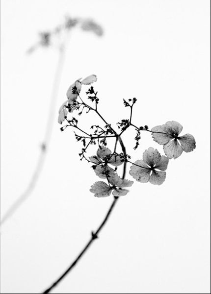 Calligraphy black and white photography flower