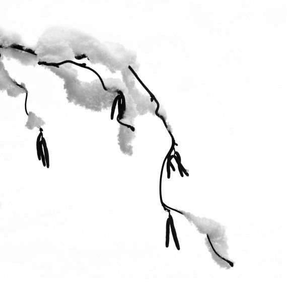 black and white snow branch
