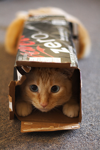 cat slowly getting into the box