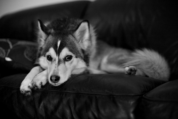 Dolce chilling on the couch by Jonathan Mueller