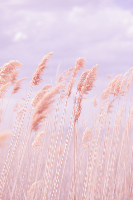 Dreamy Pastel Beach Grass