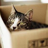 24 Cute Pictures of Cats in Boxes