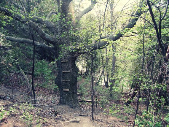 Forgotten Tree House in the Forest