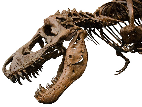 24 Awesome Pictures of Dinosaur Skeletons