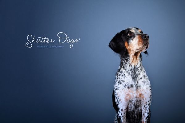 shutter dog portrait