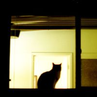 17 Spooky Pictures of Cat Silhouettes