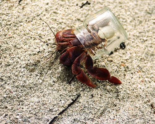 hermit crab in jar