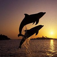 20 Beautiful Dolphin Pictures