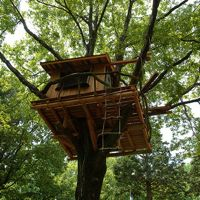 15 Nostalgic Treehouse Pictures
