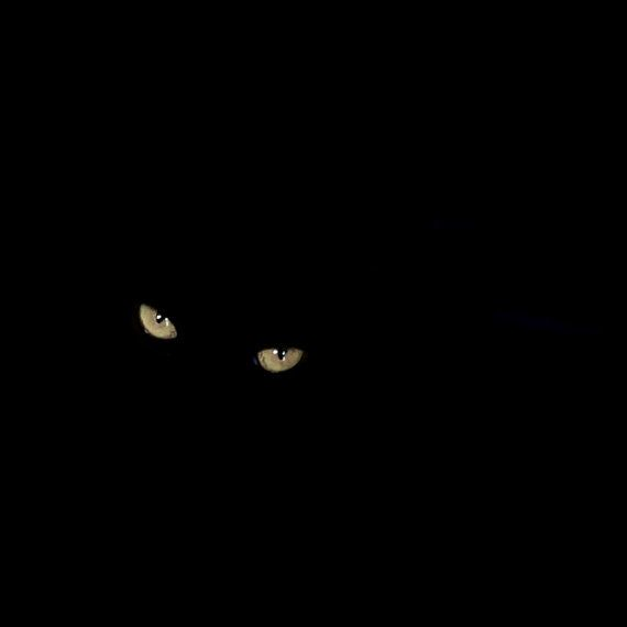 28 Cool Pictures of Glowing Cats' Eyes