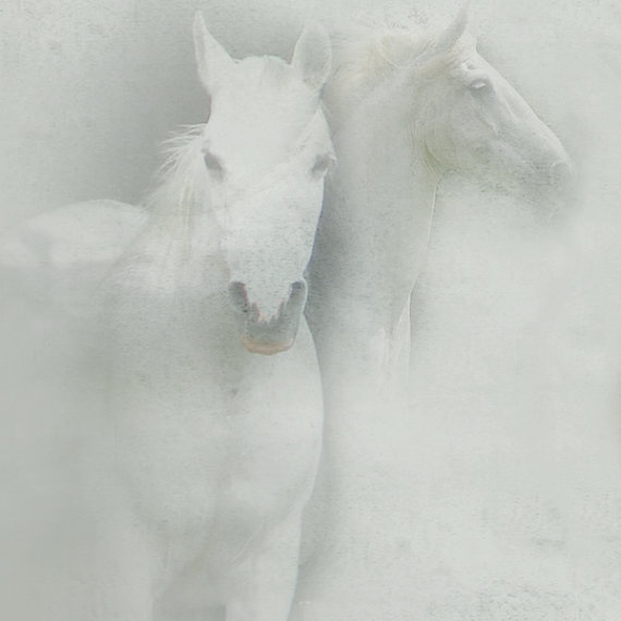white space horses