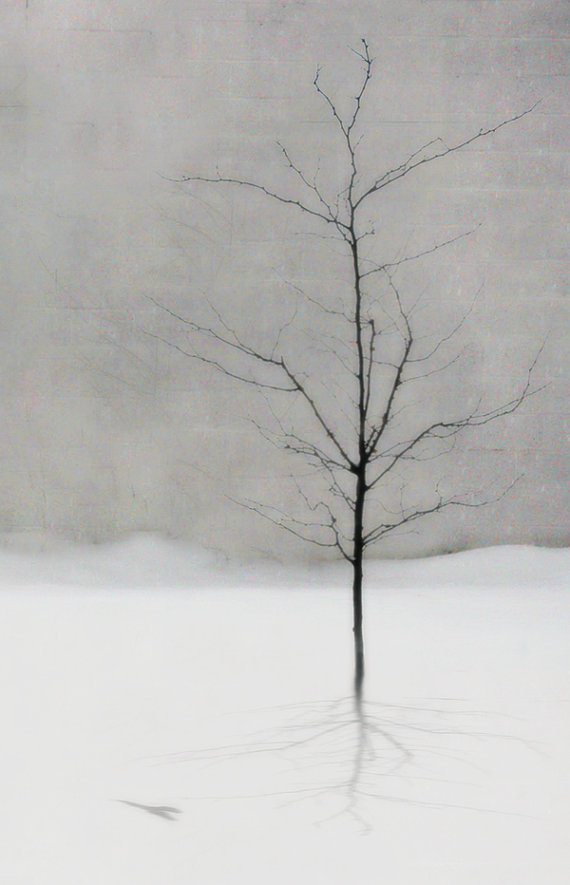 white space tree