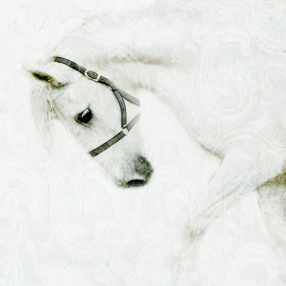 white space horse