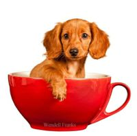 14 Cute Pictures of Animals in Cups