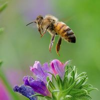 23 Buzz-worthy Pictures of Bees