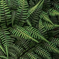 17 Lovely Pictures of Ferns