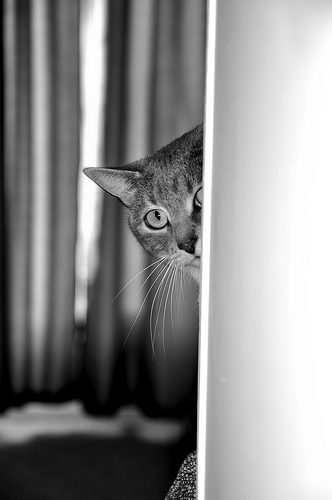 peeking cat