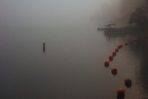 buoys in the mist