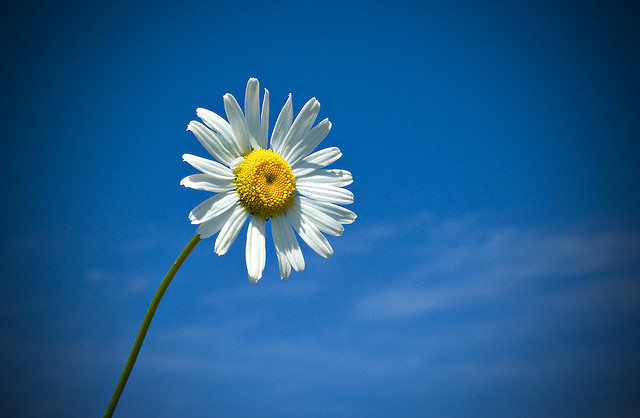 Daisy in the sky by Michel Filion