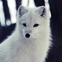 17 Great Photos of Arctic Foxes