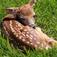 15 Darling Pictures of Fawns