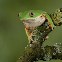 Fantastic Frog Photography by Peter Reijners