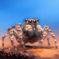 Photographing Insects (and Arachnids) – A Closer Look by Oleg Serkiz