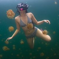Swimming with Jellyfish – Amazing Pictures of Jellyfish Lake