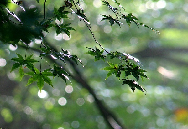 Green and spots by joka2000