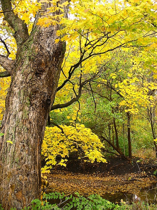 Mellow Yellow by Tim
