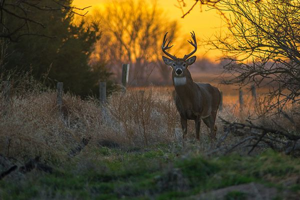 Garett Gabriel Kansas Whitetail Deer