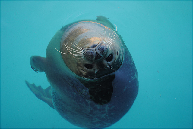 Curious Seal by Kayleigh F