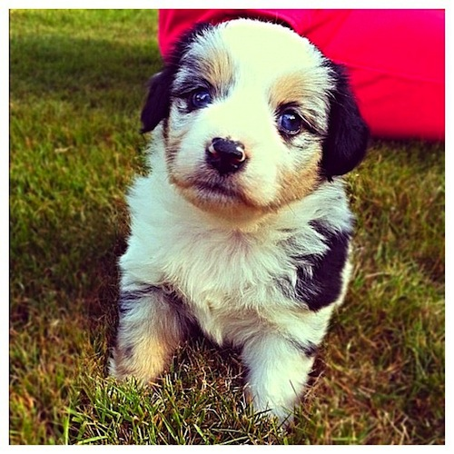 Teeny tiny puppy by kylieschaefer