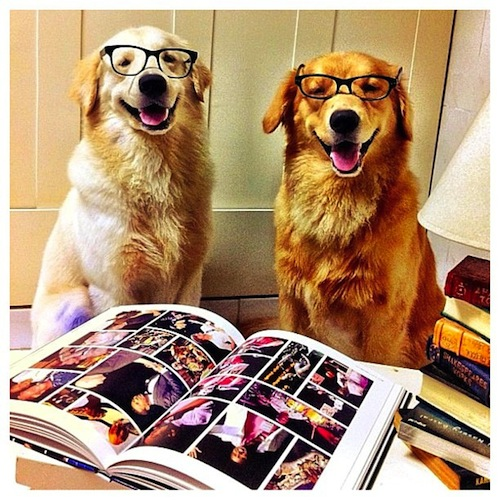 2 scholarly puppies, Barney & Barbos by jenniferadhya