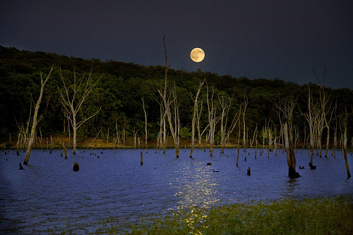 Night of the Bulls by Patrick Emerson full moon