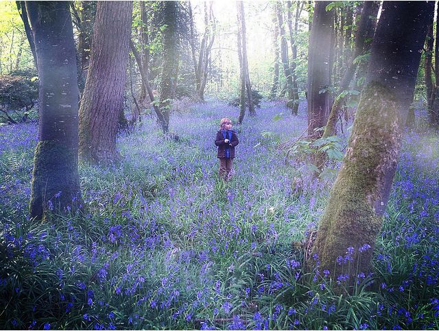 Tripping Through The Bluebells