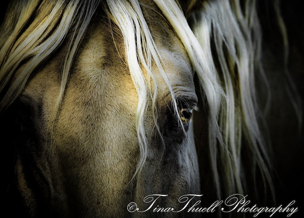 There was a gentleness in this Lusitano stallion that was remarkable to experience. Here you can see it in his eyes!